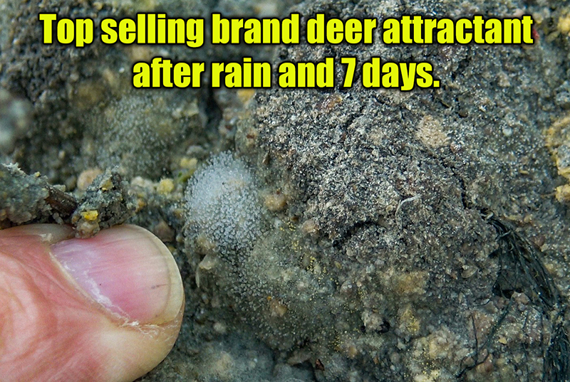 rotting deer attractants